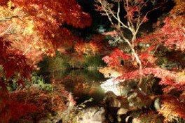 永観堂 禅林寺の紅葉 画像(3/3)