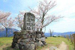 四王寺林道・岩屋城跡の桜 画像(2/3)