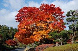 ひろしま遊学の森 広島県緑化センターの紅葉 画像(2/4)