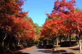 ひろしま遊学の森 広島県緑化センターの紅葉 画像(3/4)