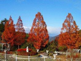 ひろしま遊学の森 広島県緑化センターの紅葉 画像(4/4)