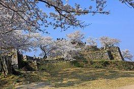 竹田城跡の桜 画像(2/2)