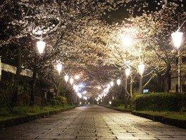 旭ヶ岡公園の桜 画像(4/5)