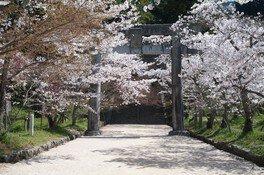 宝満宮竈門神社の桜 画像(2/5)