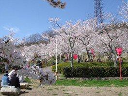 摂津峡公園の桜 画像(2/2)