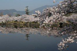 小城公園の桜 画像(2/4)