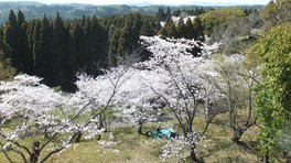 高岡公園の桜(2/3)