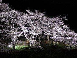 山中渓の桜 画像(2/2)