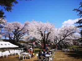 鷹巣中央公園の桜 画像(2/4)