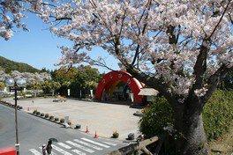 鹿児島市平川動物公園の桜(2/4)