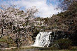 龍門の滝の桜 画像(2/3)