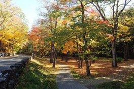 円山公園の紅葉 画像(4/5)