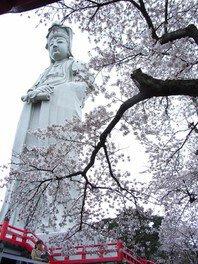 白衣大観音と桜