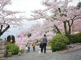 千光寺公園の桜 画像(4/5)