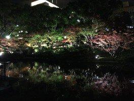 横浜公園の紅葉 画像(2/2)