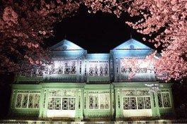神戸市立王子動物園の桜 画像(2/4)