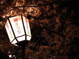 安来公園の桜 画像(2/2)