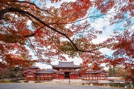 鳳凰堂と紅葉が織り成す美しい風景