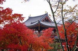 真っ赤な紅葉に包まれる鳳凰堂は必見