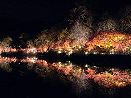 愛知県緑化センターの紅葉 画像(2/2)
