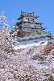 姫路城の桜 画像(5/5)