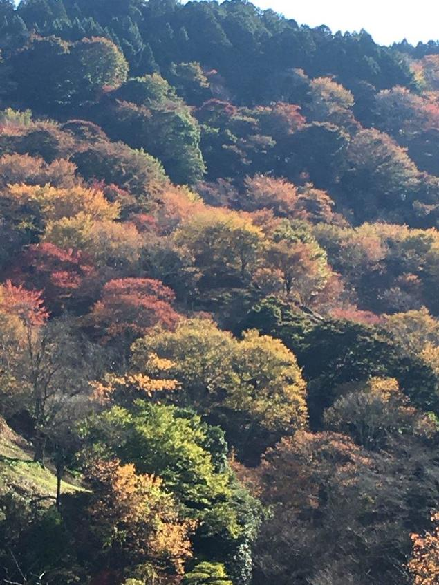 吉野山(上千本)の紅葉