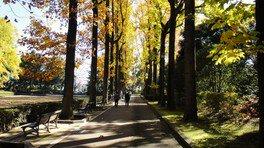 「沈床園」園路に立ち並ぶ、黄色く色づいたユリノキ並木
