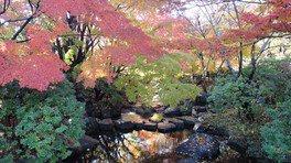 「日本庭園・かえで橋」モミジの赤が映える瀬流れ