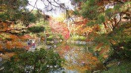 「日本庭園・むつび池」秋ならではの色彩です