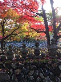 あだし野念仏寺の紅葉 画像(2/2)