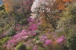 鬼岩公園の桜 画像(2/3)