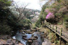 鬼岩公園の桜 画像(3/3)