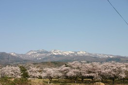 御幸公園の桜 画像(3/3)