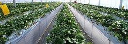 有機培土と有機肥料のみを使用
