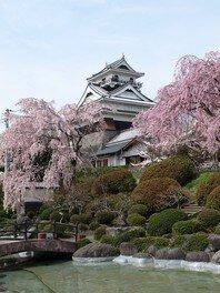 上山城・月岡公園の桜 画像(2/2)