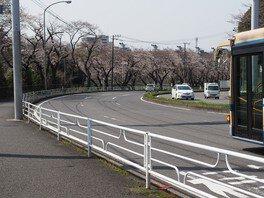 三ツ沢公園の桜 画像(3/3)