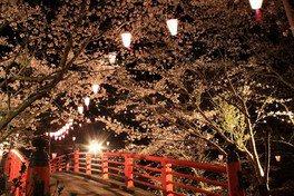 小見川城山公園の桜 画像(2/2)