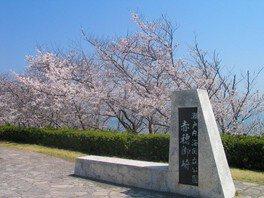 赤穂東御崎公園の桜 画像(2/2)