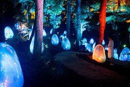 周辺の木々も光り輝き、色を変え音色を響かせる