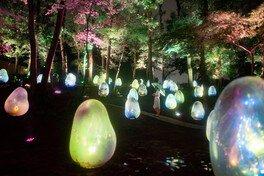 夜には光り輝き幻想的な雰囲気に包まれる