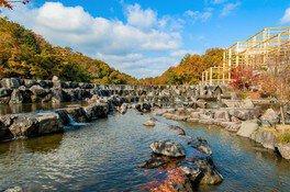 京都府立関西文化学術研究都市記念公園(けいはんな記念公園)の紅葉 画像(2/4)