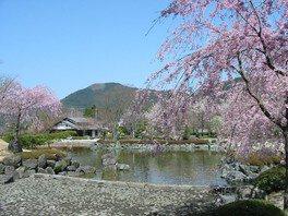桜山公園の桜 画像(3/3)