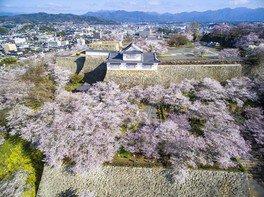 津山城(鶴山公園)の桜 画像(4/4)