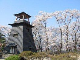 沼田公園(沼田城址)の桜 画像(2/4)