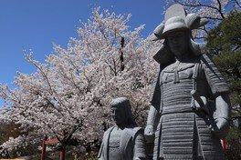 沼田公園(沼田城址)の桜 画像(3/4)