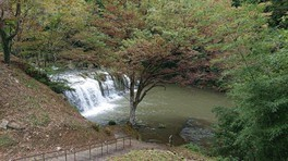稲葉山・宮島峡県定公園の紅葉 画像(2/3)