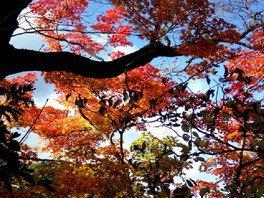 日光(霧降ノ滝)の紅葉 画像(2/3)