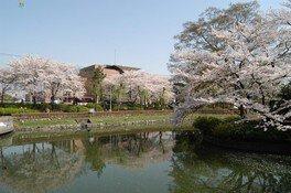 上沼公園・下沼公園の桜 画像(3/3)