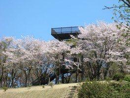 冨士山自然公園の桜 画像(2/2)
