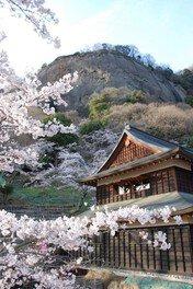 岩殿山丸山公園の桜 画像(3/3)